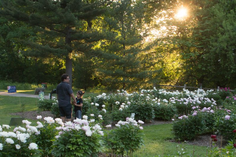 Peony Garden at the Arb, Ann Arbor MI. Photo by Andy Piper